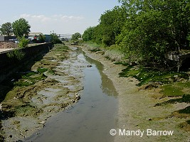 Homework help river pollution